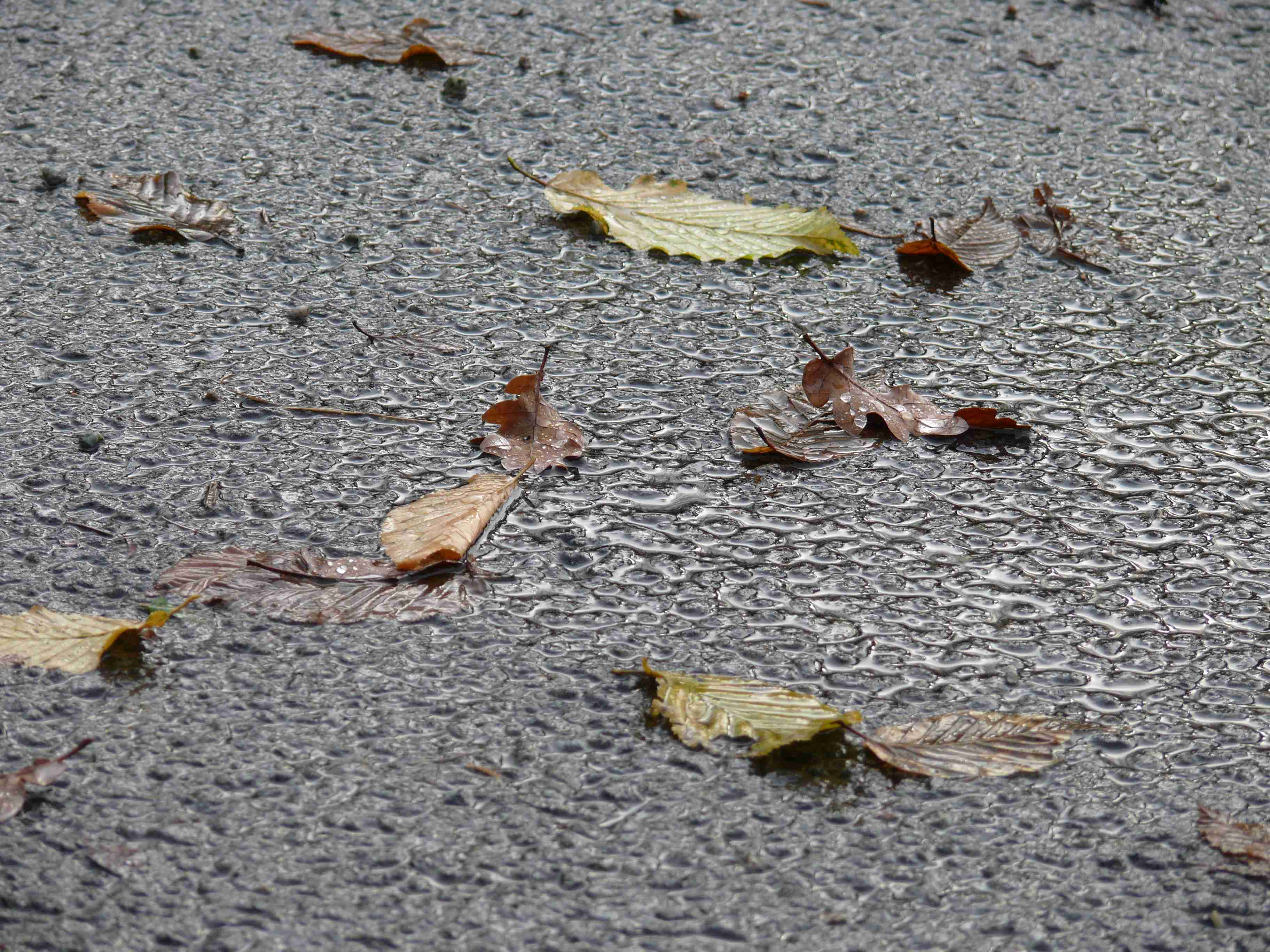listí na mokré asfaltové cestě